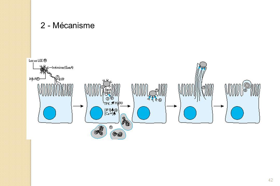 42 2 - Mécanisme