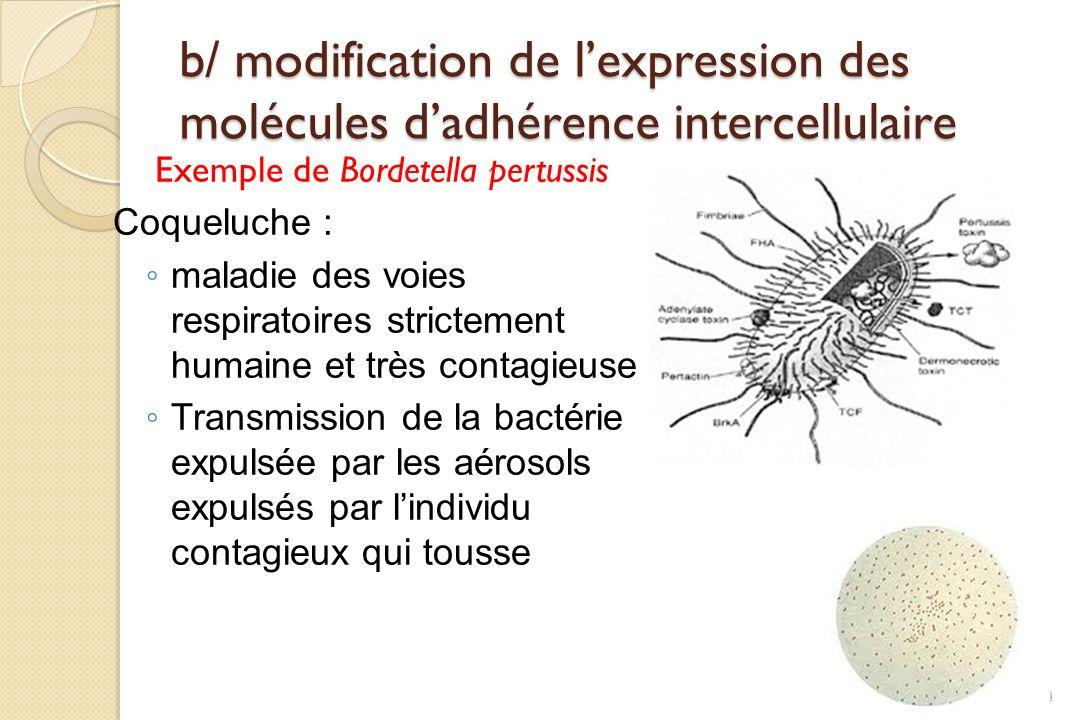 b/ modification de lexpression des molécules dadhérence intercellulaire Exemple de Bordetella pertussis Coqueluche : maladie des voies respiratoires s
