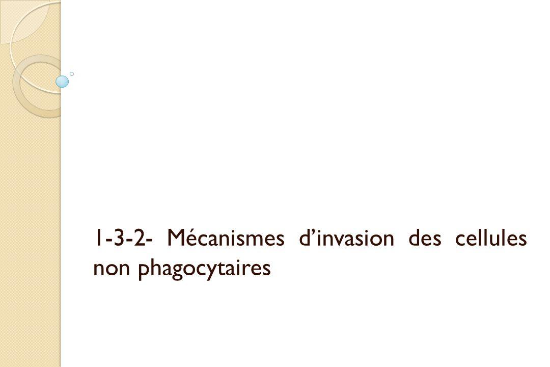 1-3-2- Mécanismes dinvasion des cellules non phagocytaires