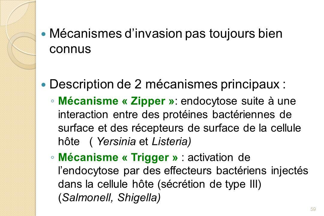 Mécanismes dinvasion pas toujours bien connus Description de 2 mécanismes principaux : Mécanisme « Zipper »: endocytose suite à une interaction entre