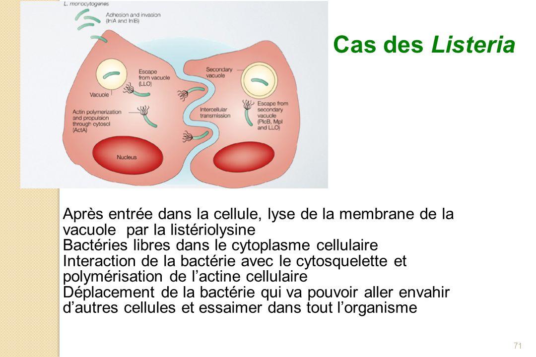 71 Après entrée dans la cellule, lyse de la membrane de la vacuole par la listériolysine Bactéries libres dans le cytoplasme cellulaire Interaction de