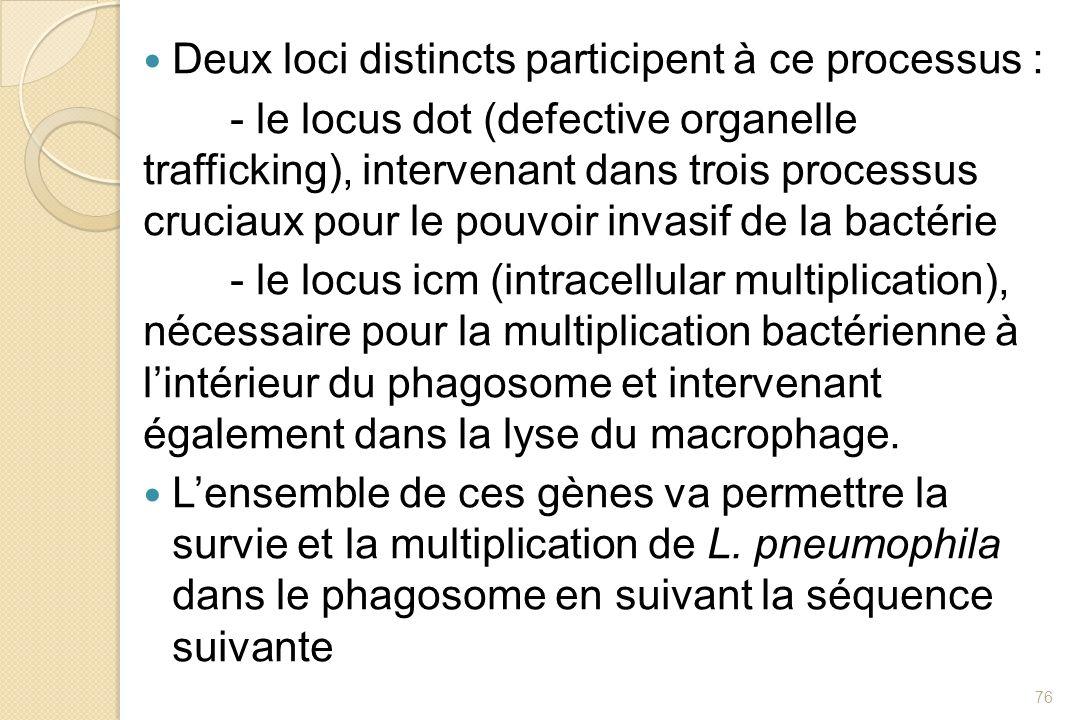 Deux loci distincts participent à ce processus : - le locus dot (defective organelle trafficking), intervenant dans trois processus cruciaux pour le p