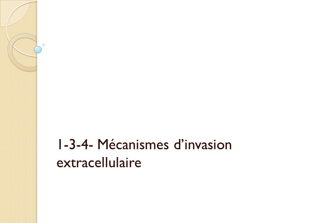 1-3-4- Mécanismes dinvasion extracellulaire
