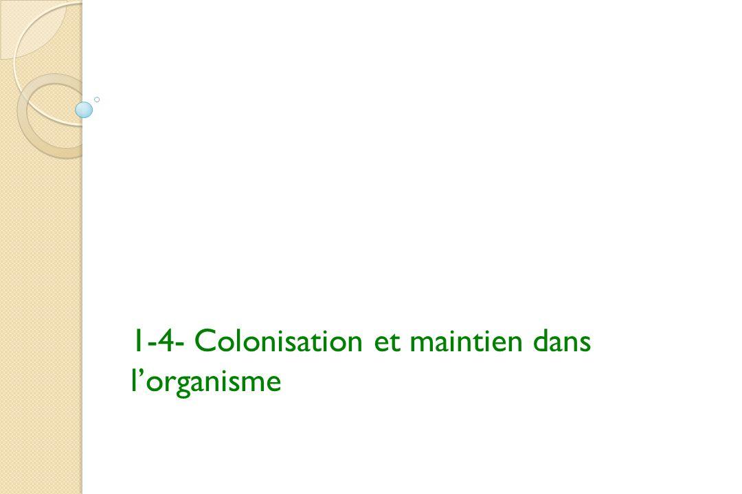 1-4- Colonisation et maintien dans lorganisme