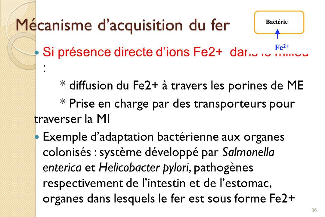 Mécanisme dacquisition du fer Si présence directe dions Fe2+ dans le milieu : * diffusion du Fe2+ à travers les porines de ME * Prise en charge par de