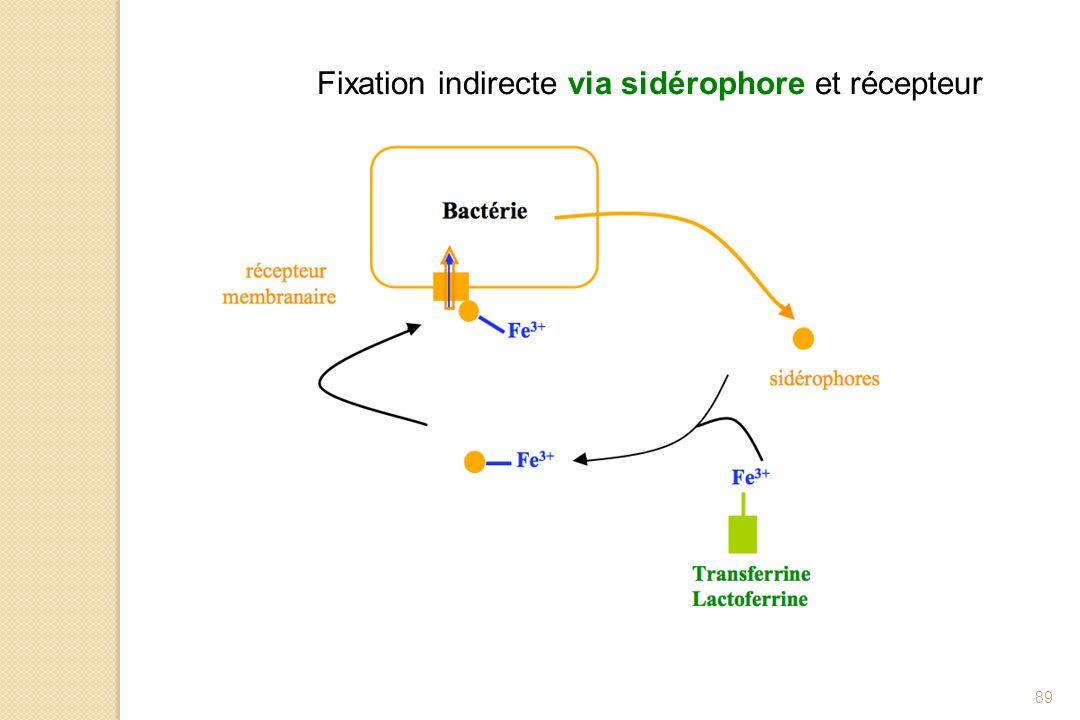 89 Fixation indirecte via sidérophore et récepteur