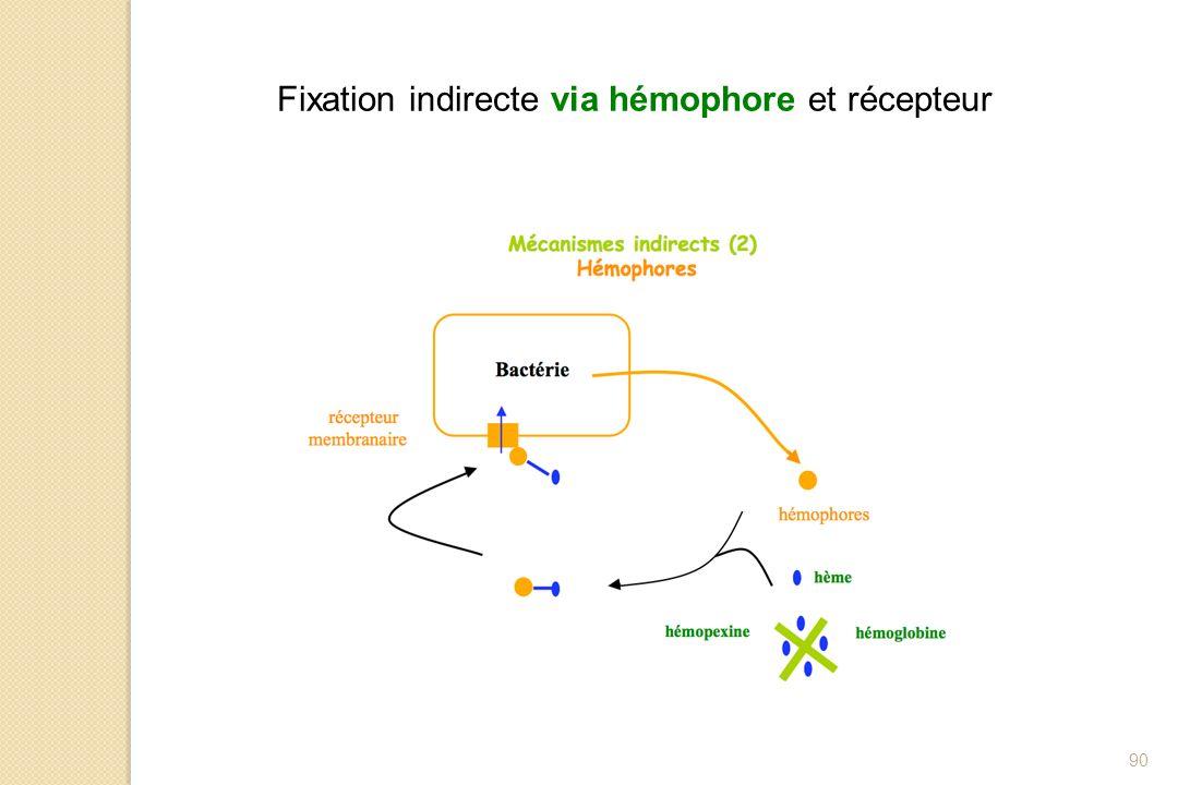90 Fixation indirecte via hémophore et récepteur