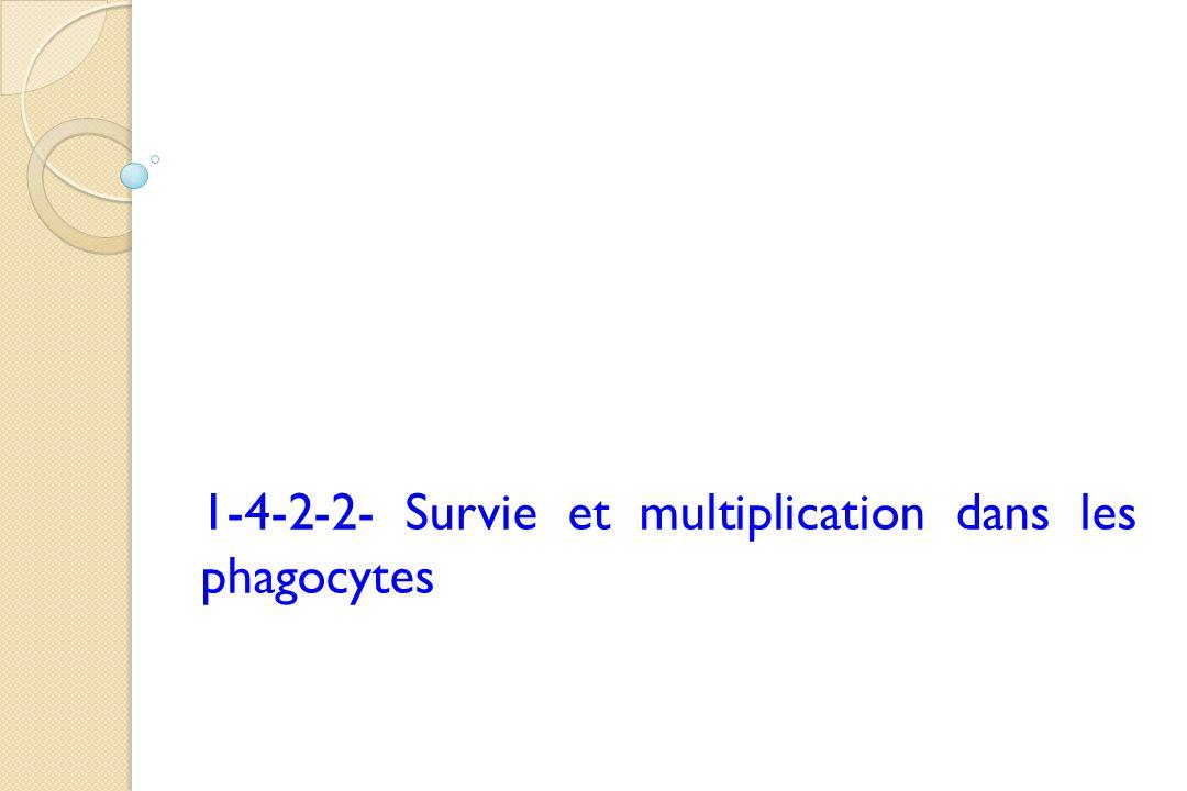 1-4-2-2- Survie et multiplication dans les phagocytes
