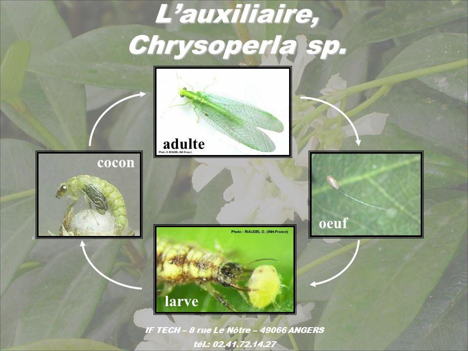 Lauxiliaire, Chrysoperla sp. IF TECH – 8 rue Le Nôtre – 49066 ANGERS tél.: 02.41.72.14.27 adulte oeuf larve cocon