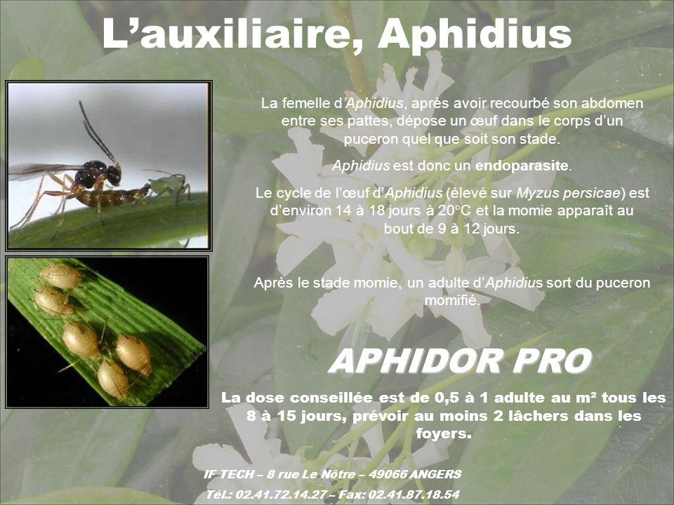 APHIDOR PRO La femelle dAphidius, après avoir recourbé son abdomen entre ses pattes, dépose un œuf dans le corps dun puceron quel que soit son stade.