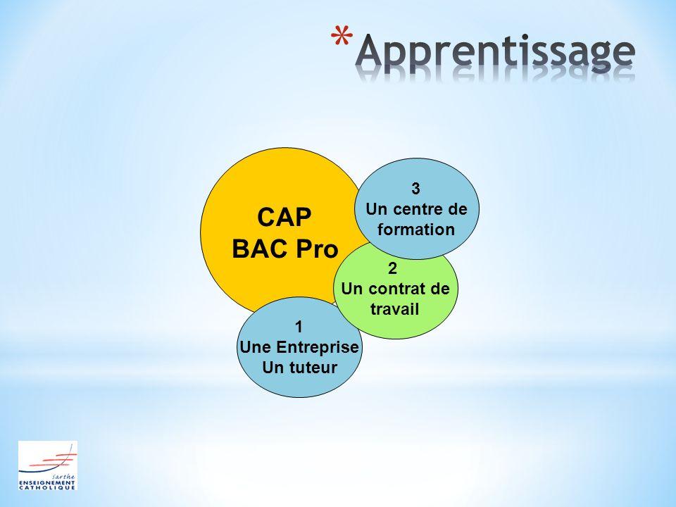 CAP BAC Pro 1 Une Entreprise Un tuteur 2 Un contrat de travail 3 Un centre de formation