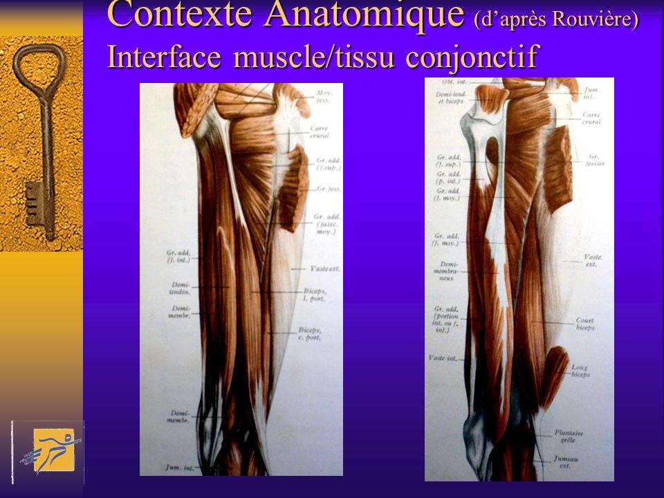 Contexte Anatomique (daprès Rouvière) Interface muscle/tissu conjonctif