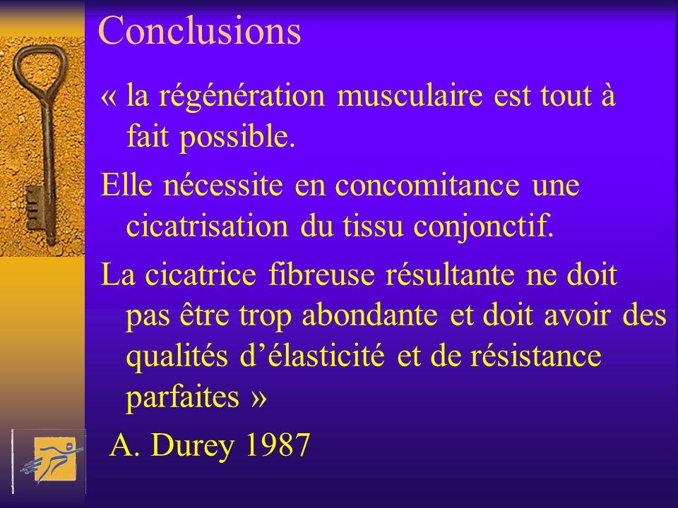 Conclusions « la régénération musculaire est tout à fait possible. Elle nécessite en concomitance une cicatrisation du tissu conjonctif. La cicatrice