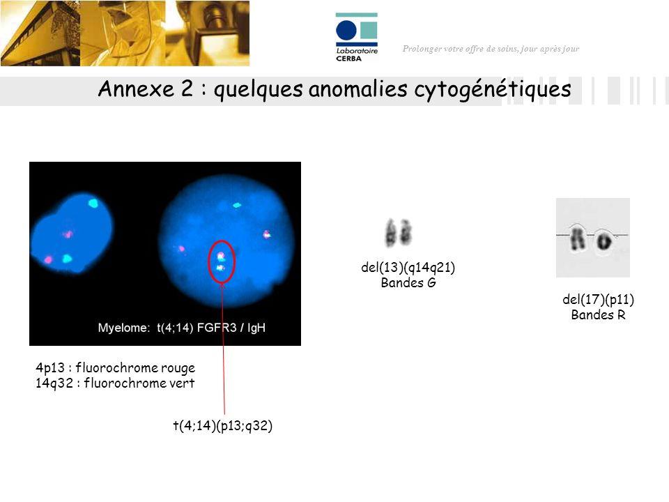 Prolonger votre offre de soins, jour après jour 4p13 : fluorochrome rouge 14q32 : fluorochrome vert t(4;14)(p13;q32) del(17)(p11) Bandes R del(13)(q14