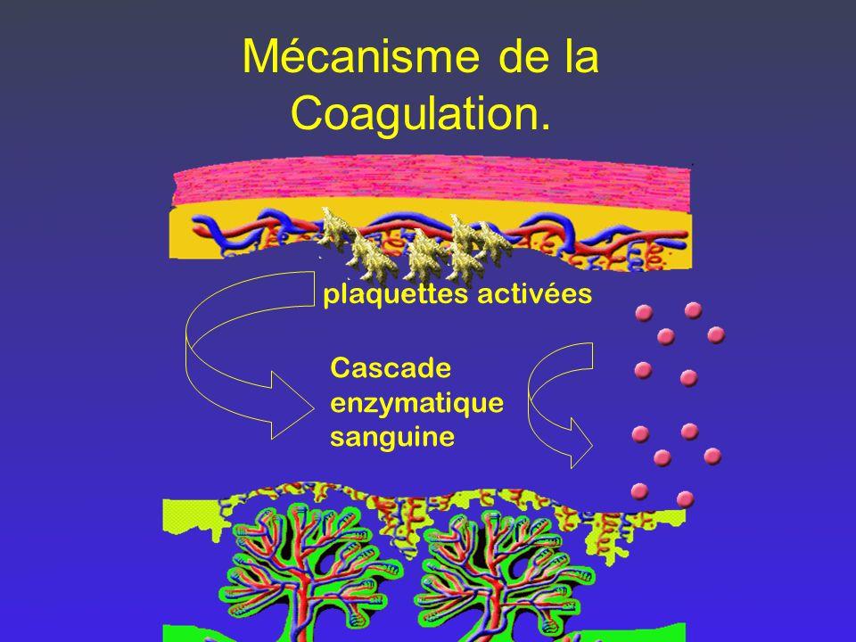 Mécanisme de la Coagulation. plaquettes activées Cascade enzymatique sanguine