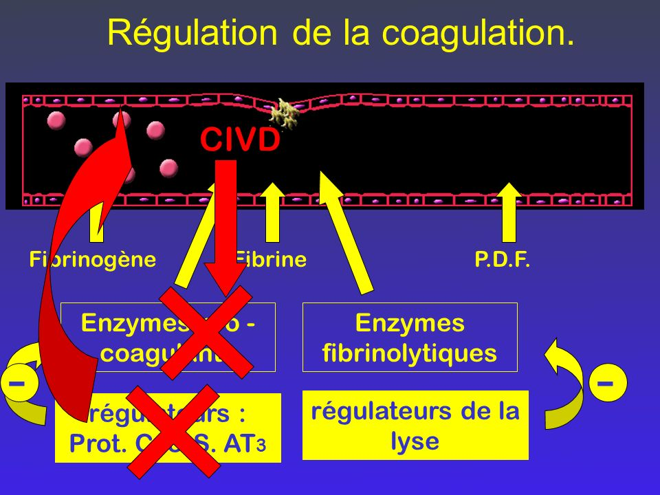 Régulation de la coagulation. FibrinogèneFibrineP.D.F. Enzymes pro - coagulants Enzymes fibrinolytiques régulateurs : Prot. C. & S. AT 3 régulateurs d