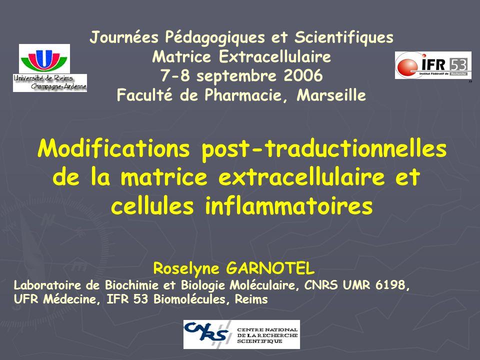 Modifications post-traductionnelles de la matrice extracellulaire et cellules inflammatoires Journées Pédagogiques et Scientifiques Matrice Extracellu
