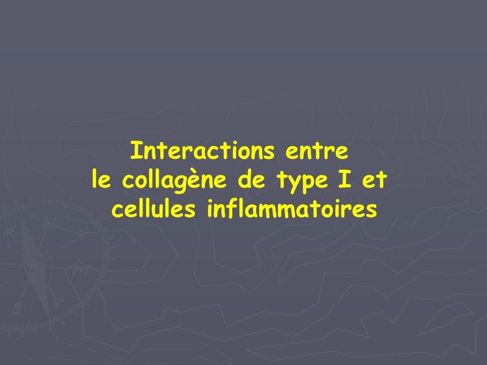 Interactions entre le collagène de type I et cellules inflammatoires