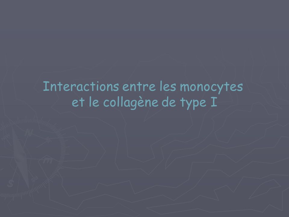Interactions entre les monocytes et le collagène de type I