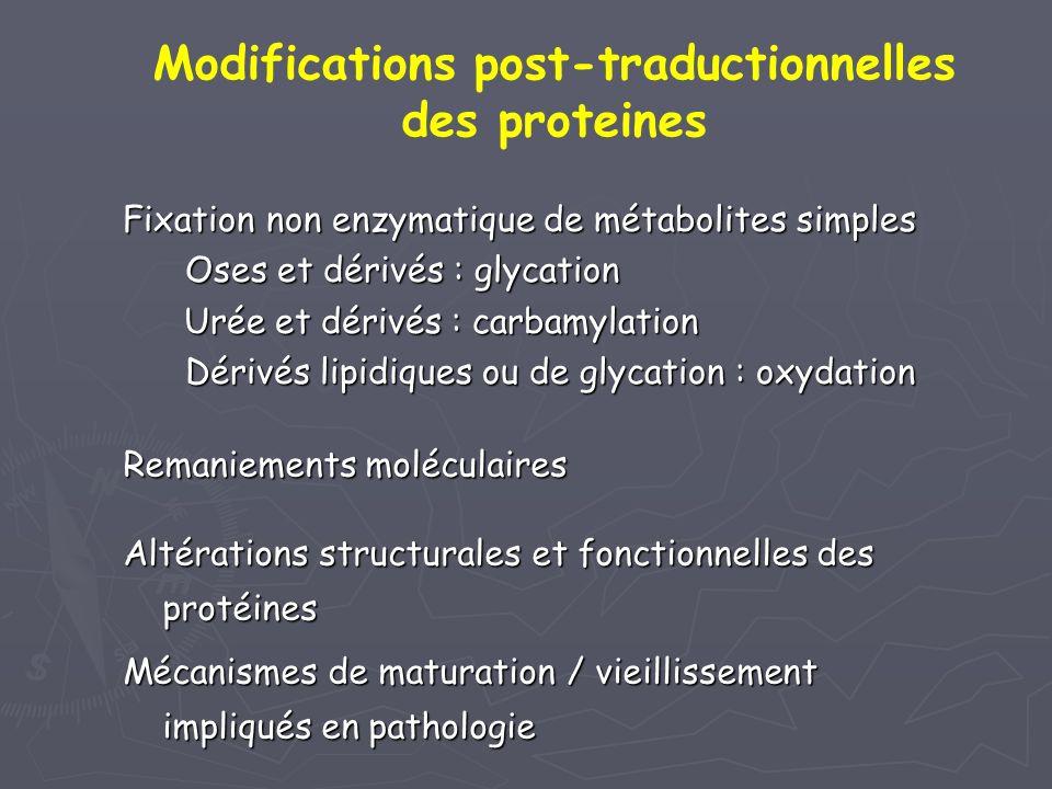 Remaniements moléculaires Altérations structurales et fonctionnelles des protéines Mécanismes de maturation / vieillissement impliqués en pathologie F