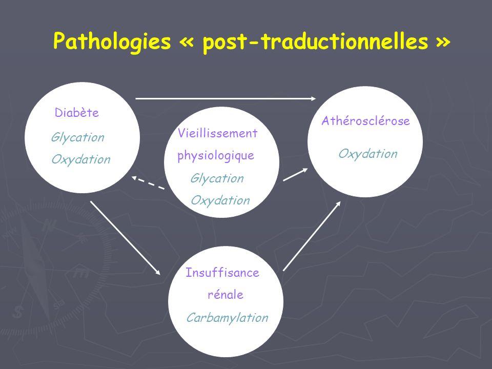 Pathologies « post-traductionnelles » Diabète Glycation Oxydation Insuffisance rénale Athérosclérose Oxydation Carbamylation Glycation Oxydation Vieil