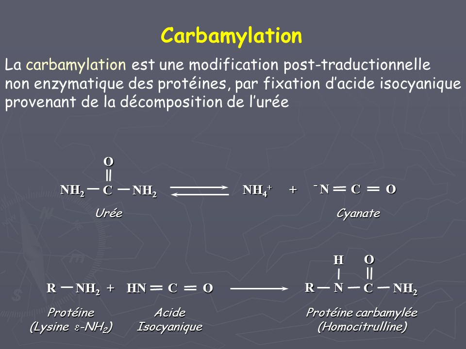 La carbamylation est une modification post-traductionnelle non enzymatique des protéines, par fixation dacide isocyanique provenant de la décompositio