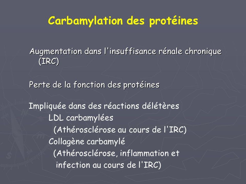 Augmentation dans l'insuffisance rénale chronique (IRC) Perte de la fonction des protéines Impliquée dans des réactions délétères LDL carbamylées (Ath
