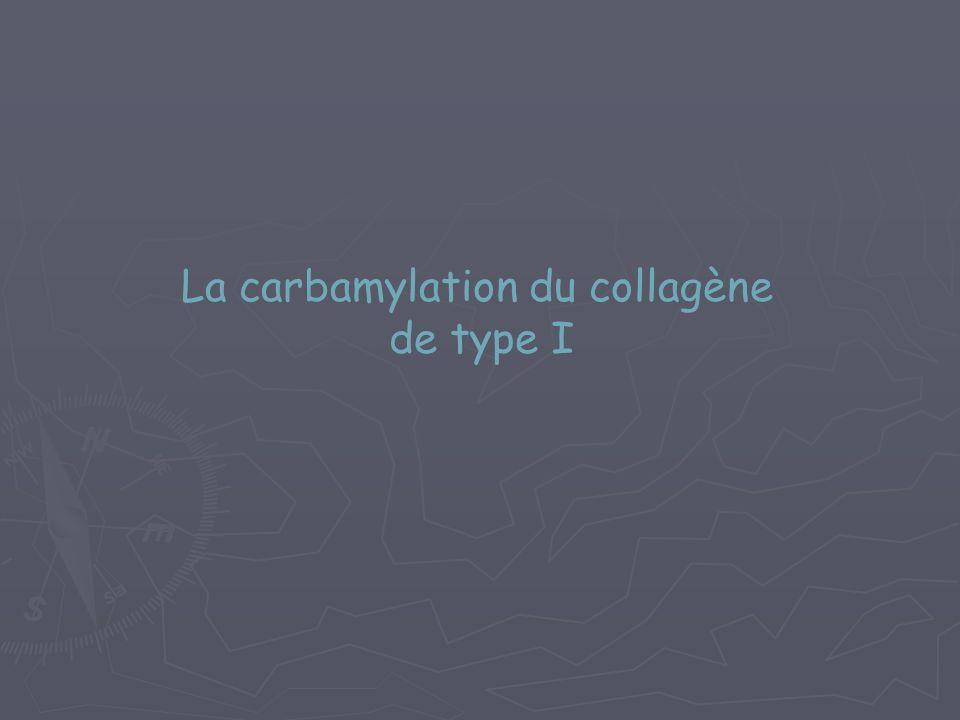 La carbamylation du collagène de type I