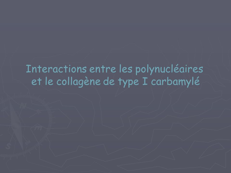 Interactions entre les polynucléaires et le collagène de type I carbamylé