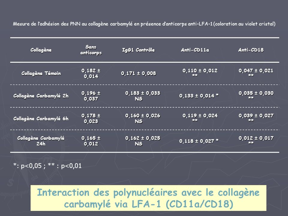 Collagène Sans anticorps IgG1 Contrôle Anti-CD11aAnti-CD18 Collagène Témoin 0,182 ± 0,014 0,171 ± 0,008 0,110 ± 0,012 ** 0,110 ± 0,012 ** 0,047 ± 0,021 ** 0,047 ± 0,021 ** Collagène Carbamylé 2h 0,196 ± 0,037 0,183 ± 0,033 NS 0,183 ± 0,033 NS 0,133 ± 0,014 * 0,133 ± 0,014 * 0,035 ± 0,030 ** 0,035 ± 0,030 ** Collagène Carbamylé 6h 0,178 ± 0,023 0,160 ± 0,026 NS 0,160 ± 0,026 NS 0,119 ± 0,024 ** 0,119 ± 0,024 ** 0,039 ± 0,027 ** 0,039 ± 0,027 ** Collagène Carbamylé 24h 0,165 ± 0,012 0,162 ± 0,025 NS 0,162 ± 0,025 NS 0,118 ± 0,027 * 0,118 ± 0,027 * 0,012 ± 0,017 ** 0,012 ± 0,017 ** *: p<0,05 ; ** : p<0,01 Mesure de ladhésion des PNN au collagène carbamylé en présence danticorps anti-LFA-1 (coloration au violet cristal) Interaction des polynucléaires avec le collagène carbamylé via LFA-1 (CD11a/CD18)
