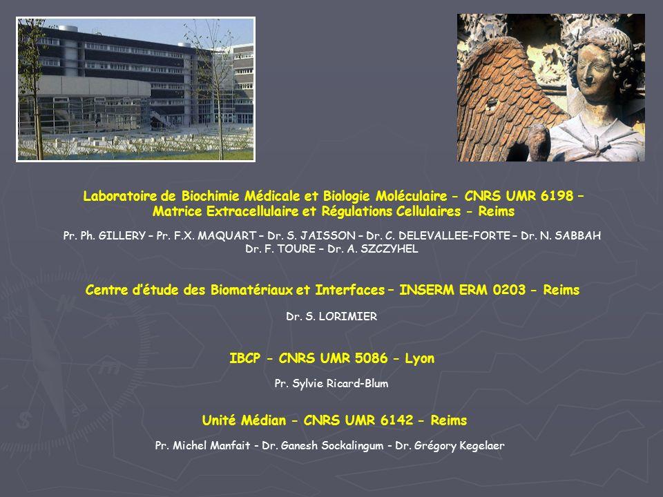 IBCP - CNRS UMR 5086 - Lyon Pr. Sylvie Ricard-Blum Unité Médian - CNRS UMR 6142 - Reims Pr. Michel Manfait - Dr. Ganesh Sockalingum - Dr. Grégory Kege