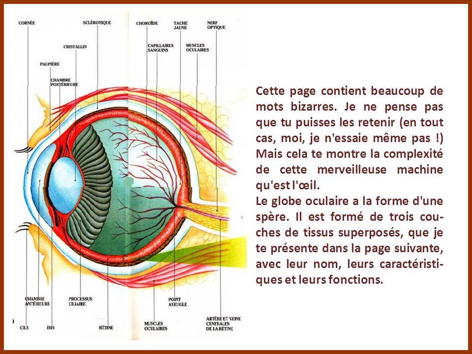 La partie la plus importante de l'œil est le globe oculaire qui est le vérita- ble organe de la vue. Regarde comme il est bien protégé dans son orbite