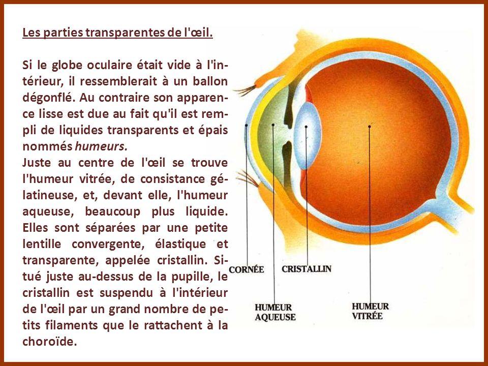 Les parties transparentes de l œil.