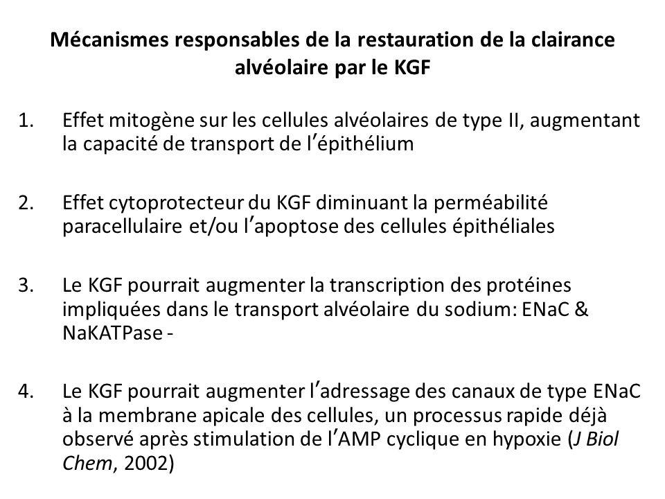 Mécanismes responsables de la restauration de la clairance alvéolaire par le KGF 1.Effet mitogène sur les cellules alvéolaires de type II, augmentant