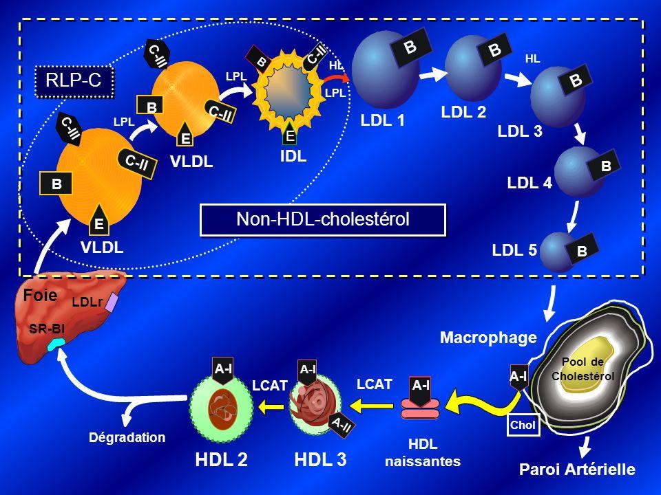 RLP-C C-III Foie LDLr SR-BI LPL E B C-II VLDL HL B LDL 1 C-II E B C-III IDL Macrophage HL A-I HDL naissantes A-I HDL 2 LCAT Dégradation LPL E B C-II VLDL B LDL 3 Pool de Cholestérol Paroi Artérielle LCAT B LDL 2 LPL LDL 4 LDL 5 B B B HDL 3 A-I A-II A-I ApoB 100 (ApoB) Chol