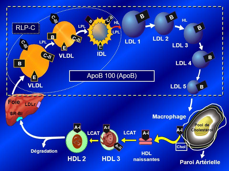 Comparaison des concentrations de LDL-C, non-HDL-C et apoB avant et après traitement par statine Données obtenues à partir dune analyse de lessai MERCURY II Ballantyne et al.