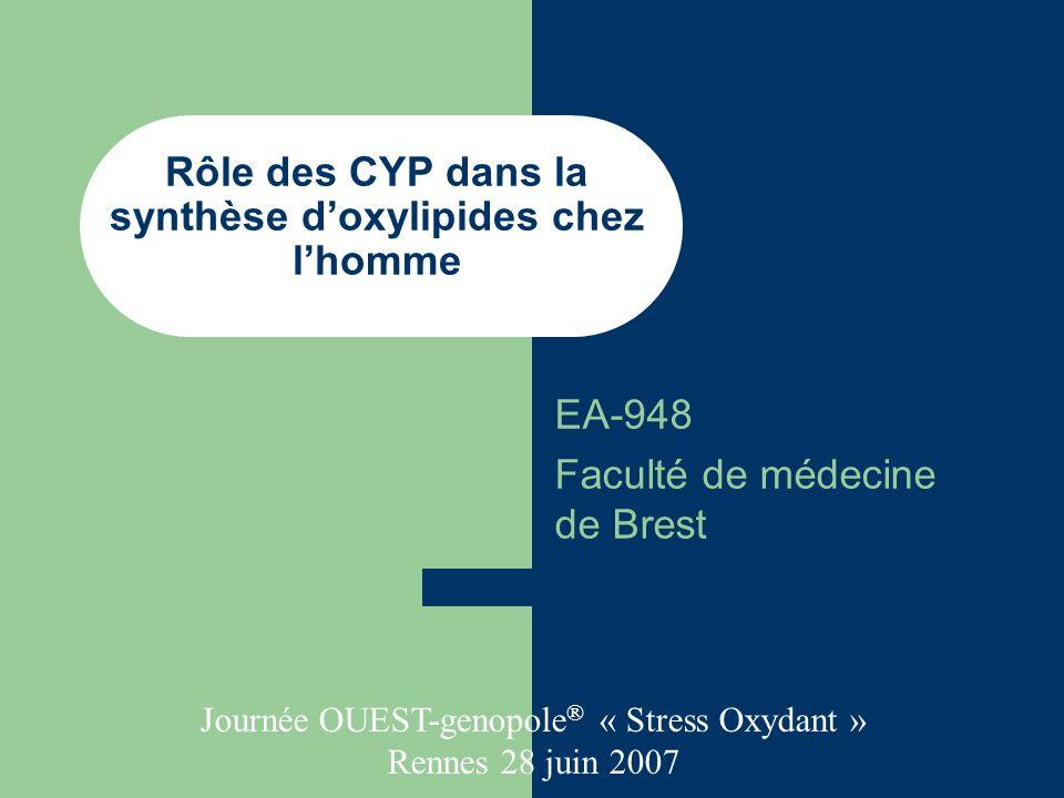 Rôle des CYP dans la synthèse doxylipides chez lhomme EA-948 Faculté de médecine de Brest Journée OUEST-genopole ® « Stress Oxydant » Rennes 28 juin 2007