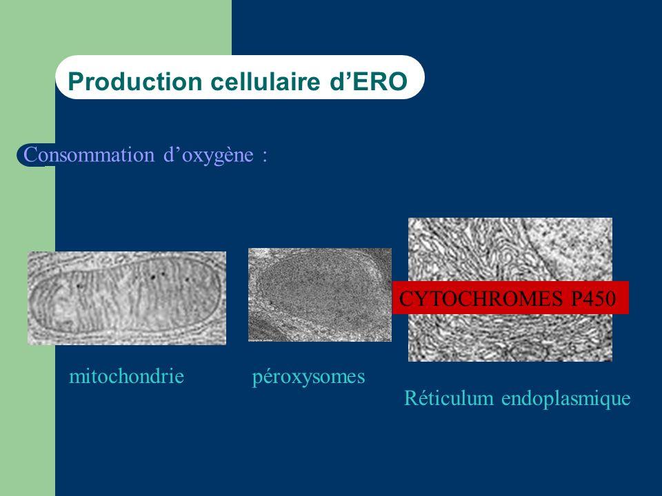 Production cellulaire dERO Consommation doxygène : mitochondrie Réticulum endoplasmique péroxysomes CYTOCHROMES P450