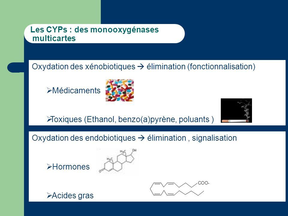 Les CYPs : des monooxygénases multicartes Oxydation des xénobiotiques élimination (fonctionnalisation) Médicaments Toxiques (Ethanol, benzo(a)pyrène, poluants ) Oxydation des endobiotiques élimination, signalisation Hormones Acides gras COO-