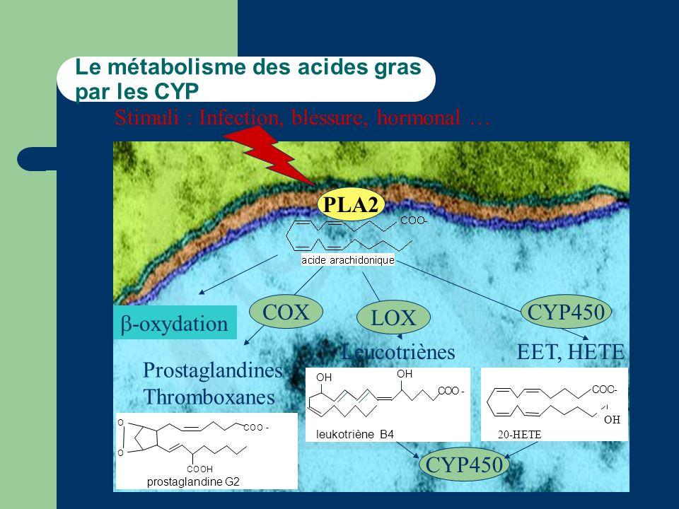 Le métabolisme des acides gras par les CYP PLA2 -oxydation Stimuli : Infection, blessure, hormonal … Prostaglandines Thromboxanes COX O O COO - COOH prostaglandine G2 Leucotriènes LOX COO - OH leukotriène B4 OH EET, HETE CYP450 COO- OH 20-HETE CYP450