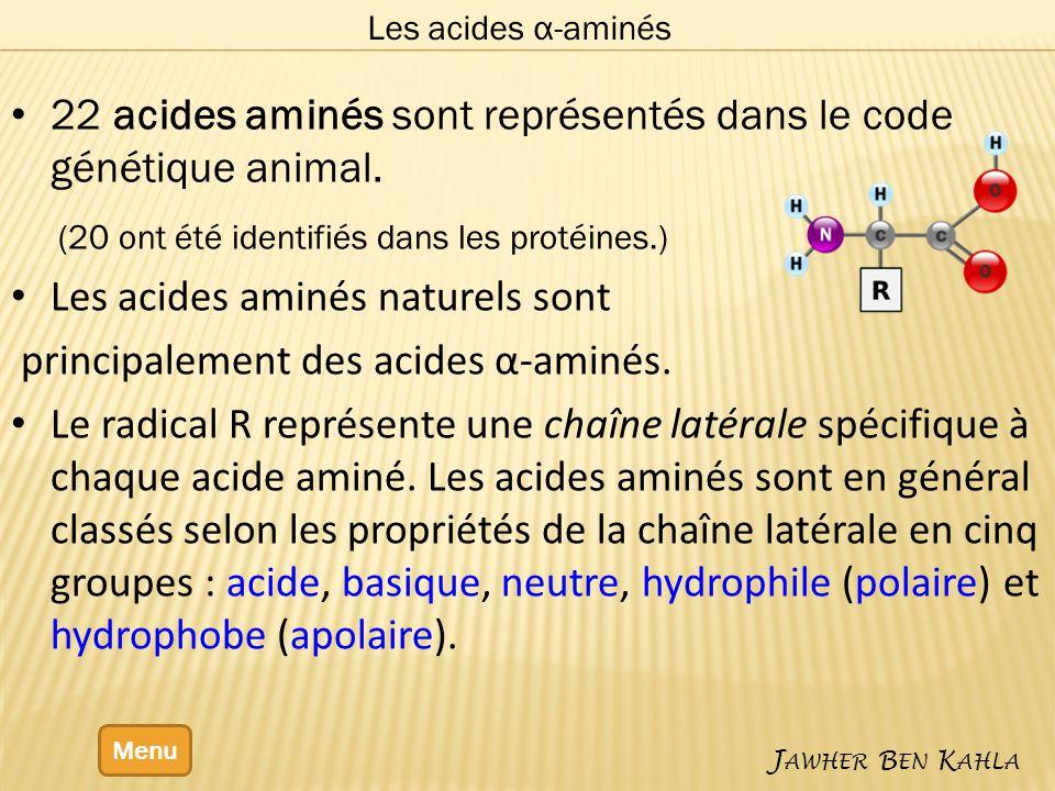 22 acides aminés sont représentés dans le code génétique animal. (20 ont été identifiés dans les protéines.) Les acides aminés naturels sont principal