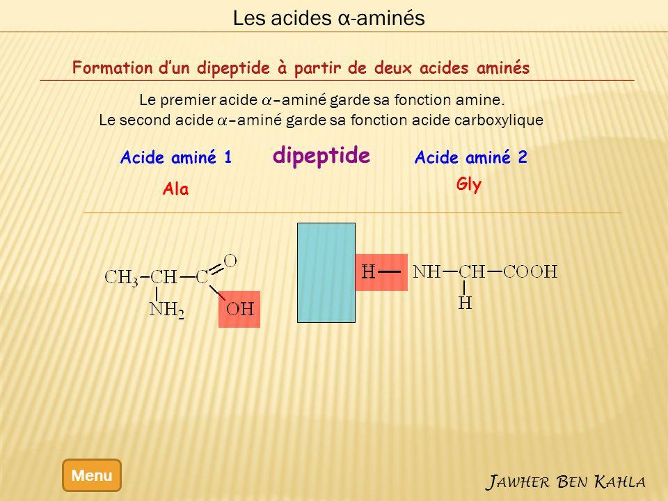 Les acides α-aminés Menu J AWHER B EN K AHLA Formation dun dipeptide à partir de deux acides aminés Le premier acide –aminé garde sa fonction amine. L
