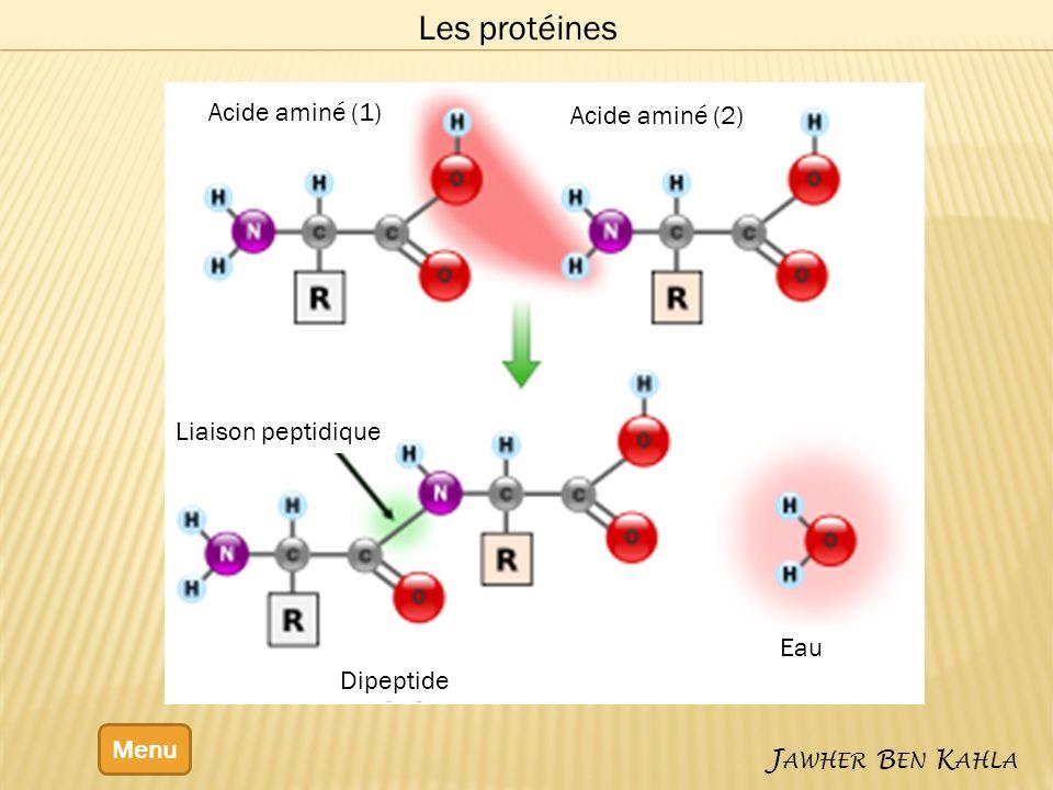 Menu J AWHER B EN K AHLA Les protéines Acide aminé (1) Acide aminé (2) Eau Dipeptide Liaison peptidique