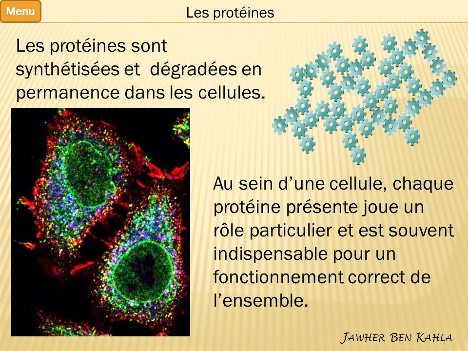 Menu J AWHER B EN K AHLA Les protéines Les protéines sont synthétisées et dégradées en permanence dans les cellules.