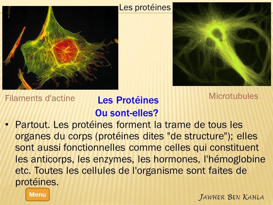 Menu J AWHER B EN K AHLA Les protéines Partout. Les protéines forment la trame de tous les organes du corps (protéines dites