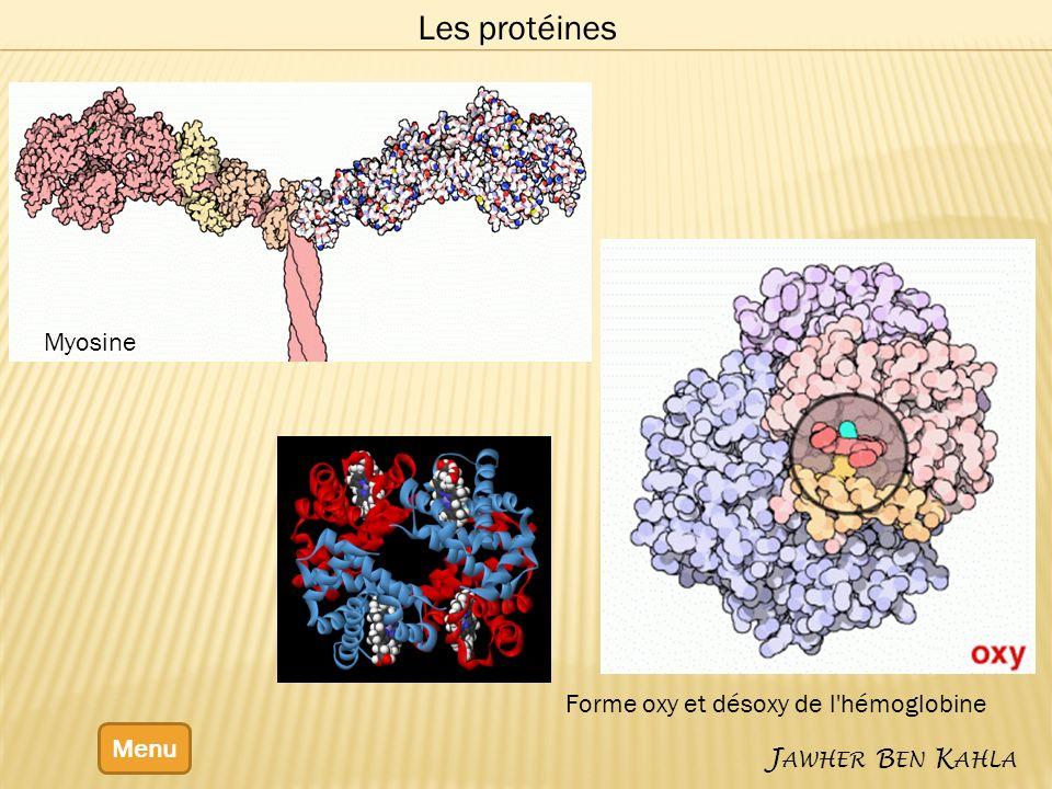 Menu J AWHER B EN K AHLA Les protéines Forme oxy et désoxy de l'hémoglobine Myosine