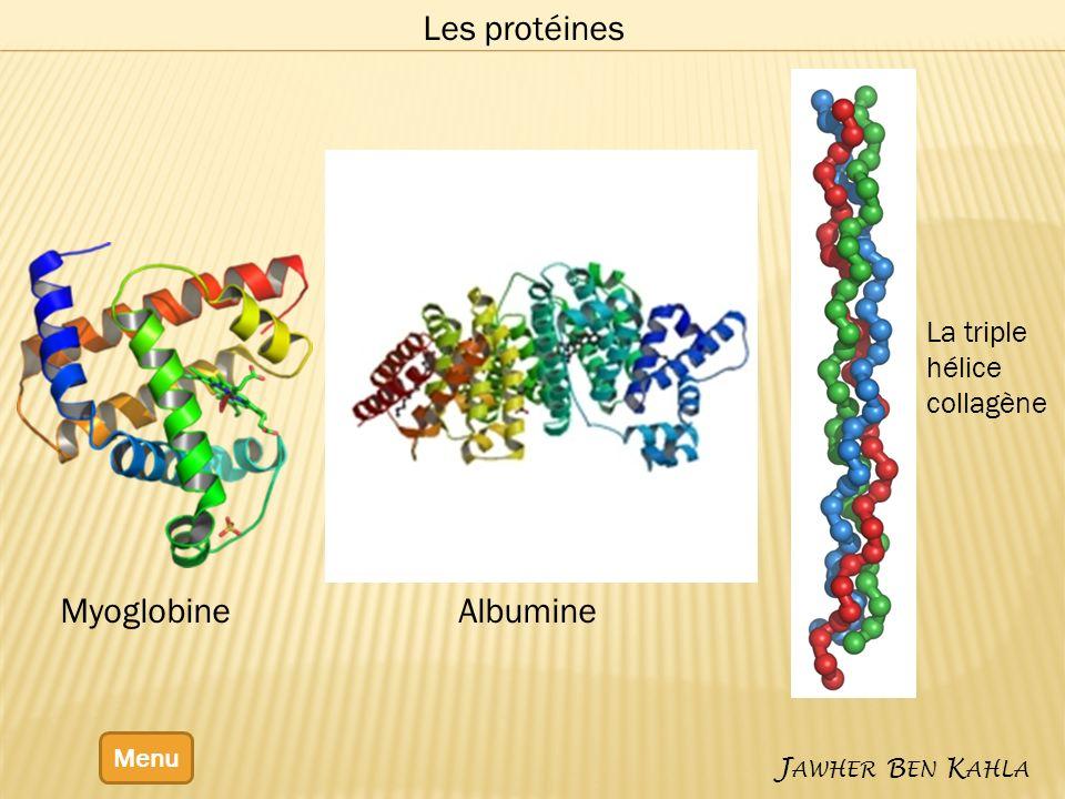 Menu J AWHER B EN K AHLA Les protéines La triple hélice collagène MyoglobineAlbumine