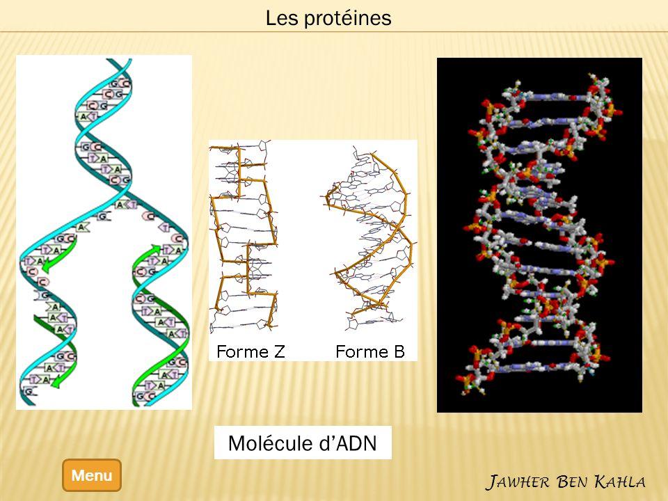 Menu J AWHER B EN K AHLA Les protéines Molécule dADN
