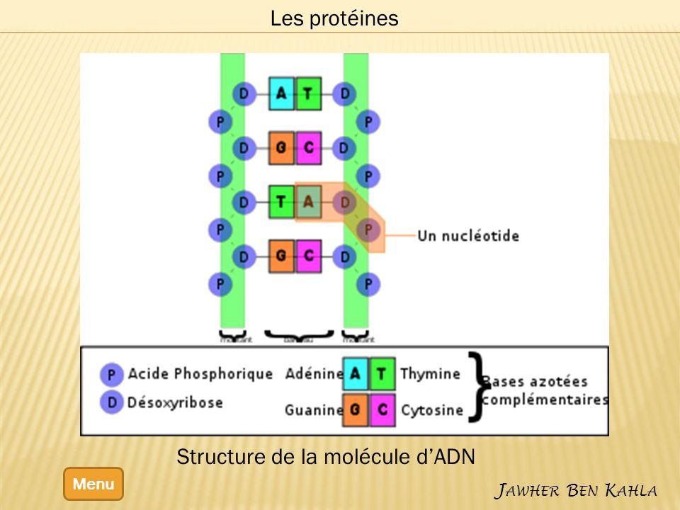 Menu J AWHER B EN K AHLA Les protéines Structure de la molécule dADN