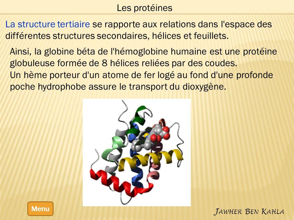 Menu J AWHER B EN K AHLA Les protéines La structure tertiaire se rapporte aux relations dans l'espace des différentes structures secondaires, hélices